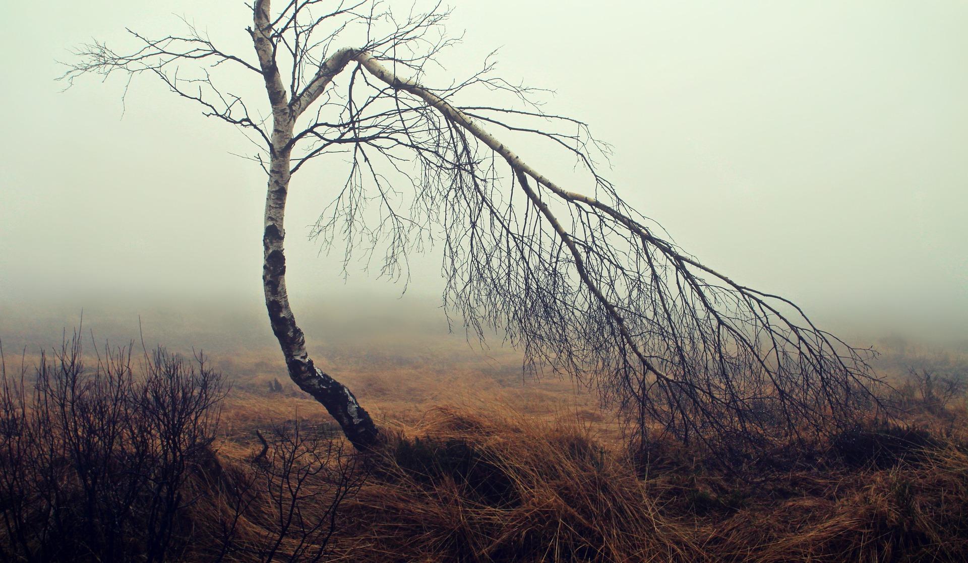 arbre triste
